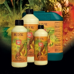House and Garden - Bud-XL 1l