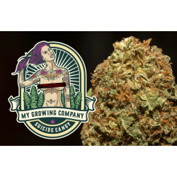 My Growing Company Suicide Candy 3 g